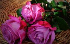 csendélet virágcsokor és dekoráció rózsa