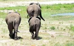 Chobe Nemzeti Park
