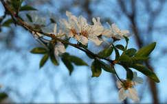 Tavasz  Fotó:Novák Titanilla