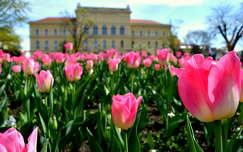 Szeged tavasszal, az egyetemmel a háttérben