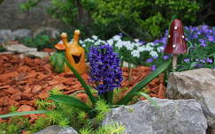jácint tavaszi virág kertek és parkok