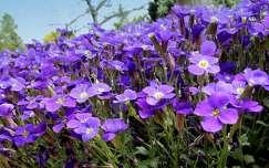 Tavaszi vir�g a kertben