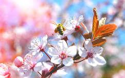 Tavasz, méh, virágzó fa, montázs