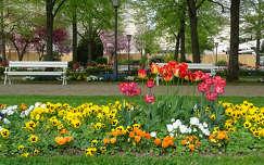 pad tavasz árvácska tulipán kertek és parkok tavaszi virág
