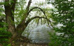Duna-part Esztergom közelében