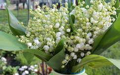 tavaszi virág gyöngyvirág virágcsokor és dekoráció