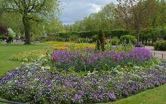 Rose Garden,London
