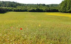 Tavaszi mező