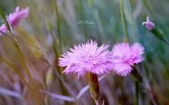 Kerti virágok, tavasz