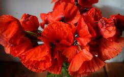vadvirág pipacs virágcsokor és dekoráció