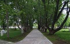 Balatonalmádi, Öreg-park, Platánsor