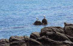 kövek és sziklák sirály vizimadár tengerpart