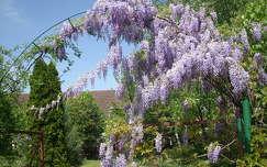 tavasz akácvirág