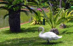Madeira, Funchall városi park