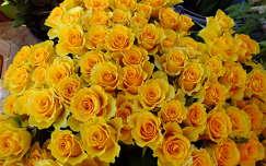 Sárga rózsa, Fotó: Csonki