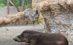 Tapír és nandu a Budapesti Állatkertben