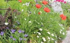 Ausztria nyári virágai
