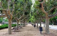 kertek és parkok fa pad út fasor