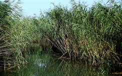 Balatoni horgászó hely