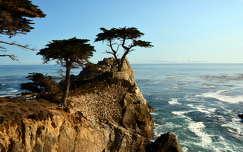 California,USA