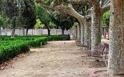 spanyolország fa pad barcelona kertek és parkok fasor
