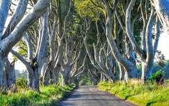 Észak-Írország,Sötét Erdő