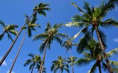 p�lm�k,Honolulu,Hawaii,USA