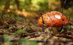 élet az erdőben