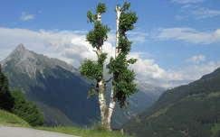 Brandberg, Tirol, Ausztria, 2015.július