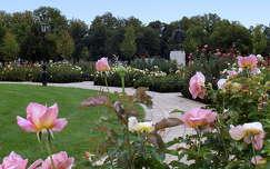 Rózsapark Szolnokon.