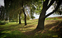árnyék fa
