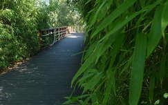 Bambuszösvény a Kopaszi gáton