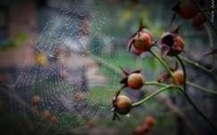 pókháló ősz vízcsepp