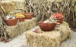kukorica ősz termény