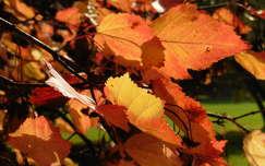 Őszi vörös