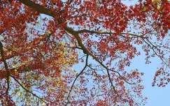 Autumn, falevelek