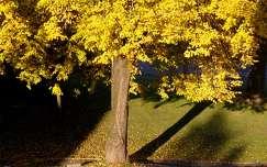 árnyék fa ősz