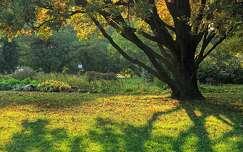 árnyék ősz fa