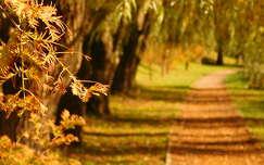 Marostő ősszel (Szeged)