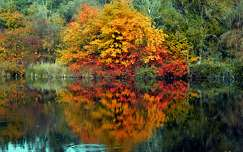 Ősz, tükröződés, tó, erdő