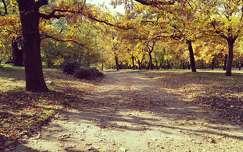 út árnyék fa ősz
