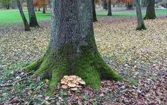 kertek és parkok gomba fa ősz