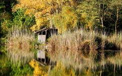 ősz,tópart