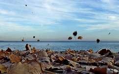 szél, Balaton, levél, ősz