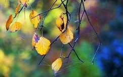 pókháló levél ősz színes