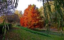 Ősz Dunaújvárosban