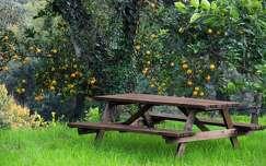 szicília gyümölcs pad fa narancs olaszország örökzöld borostyán