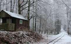 erdő tél faház