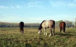 Legel�sz� lovak