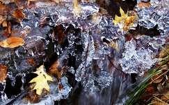 levél jég tél
